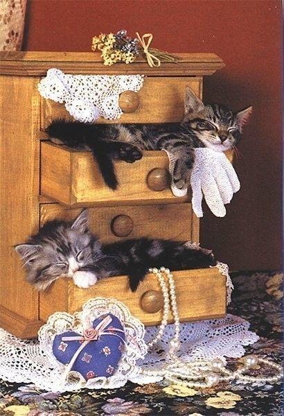 chats tiroirs