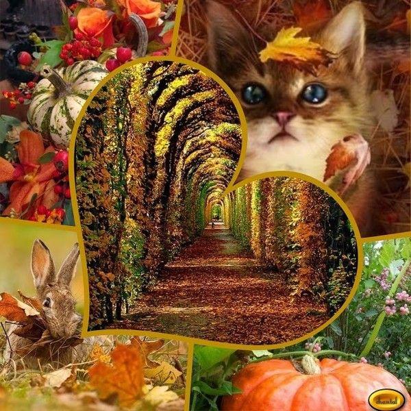 Je vous souhaite un bel automne mes ami(e)s