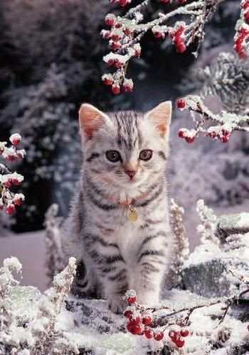 6129c433b69dcdd13099dbf852dffee9.jpg_winter_cat