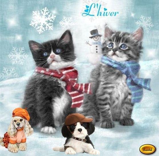 L'hiver aussi pour les animaux