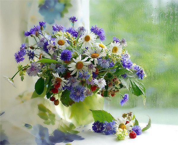 Je vous souhaite une belle journée